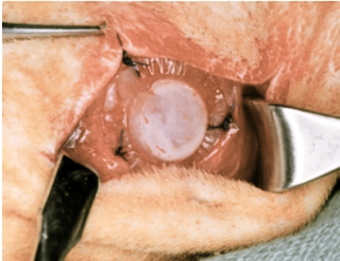 In Vivo Implantation